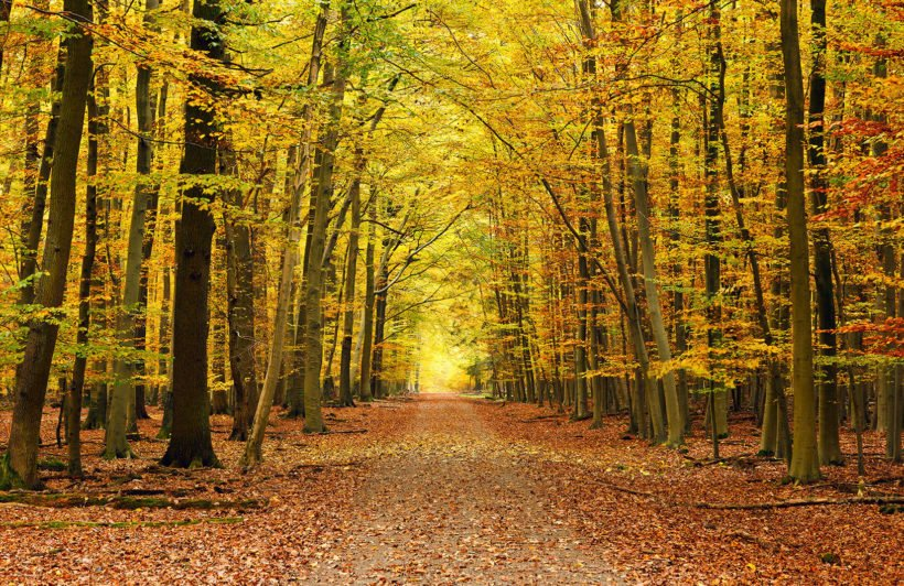Create Your Own Quote Wallpaper Free Autumn Pathway Tree Wallpaper Wall Mural Muralswallpaper