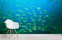 Fish School Wallpaper Wall Mural | MuralsWallpaper.co.uk