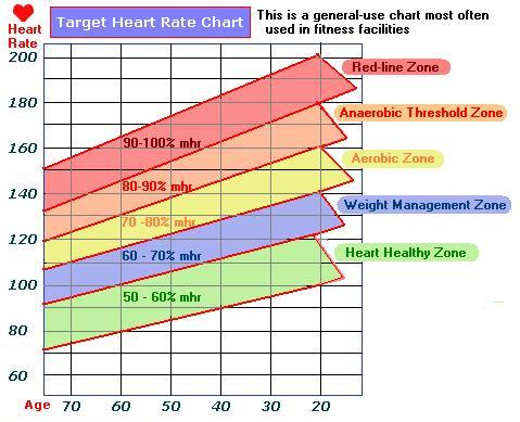 heart rate chart Muscle Measure Celebrity Health and Fitness - rate chart