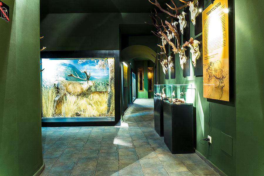 entrada al museo de la caza