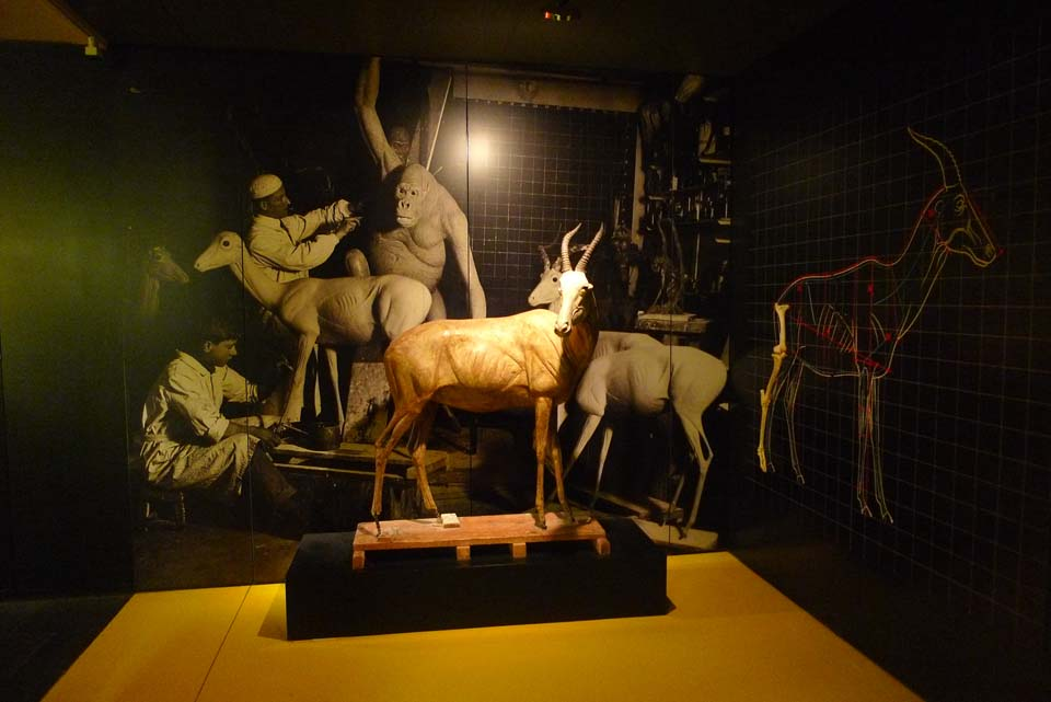 BEST WORLD TAXIDERMY / LAS MEJORES TAXIDERMIA DEL MUNDO