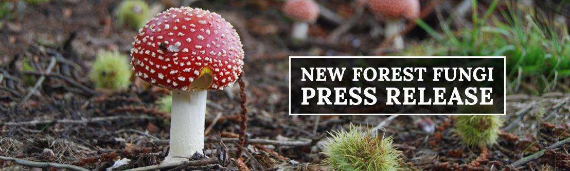 "Mushroom News: Fungi Picking Ban ""unscientific"" say fungi experts"