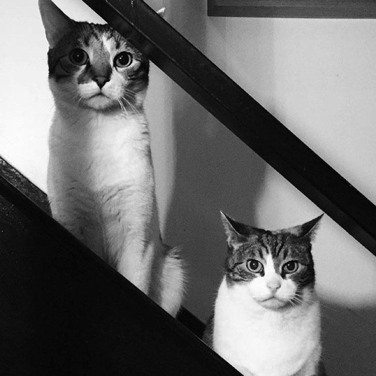 Datachi_Catsx740