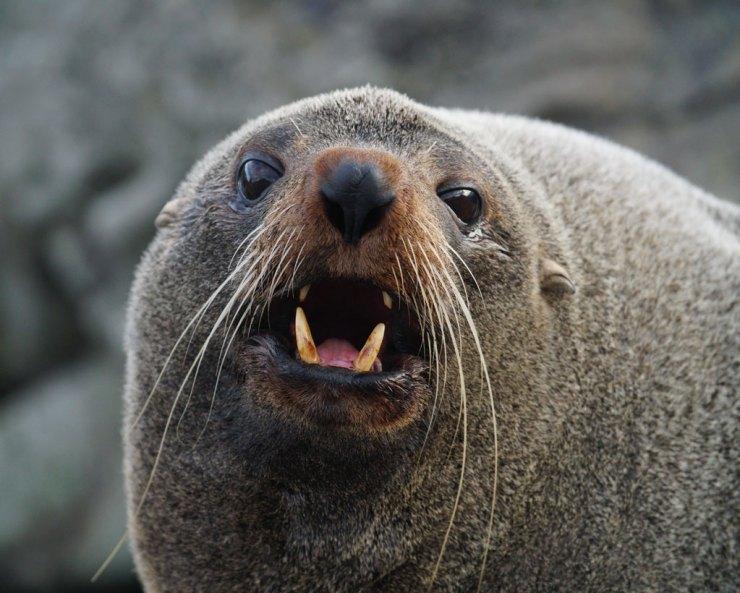 Seal02