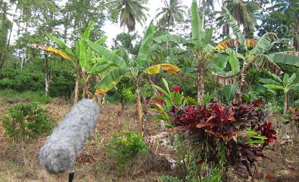 Samoa field trip 2
