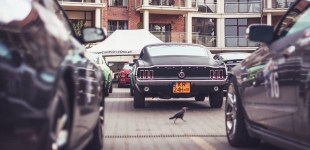 Mustang Race 2016