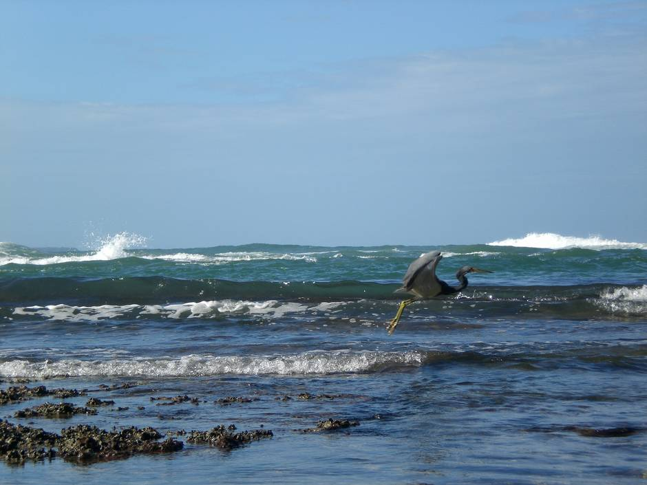 Waves and wildlife are among Costa Rica attractions