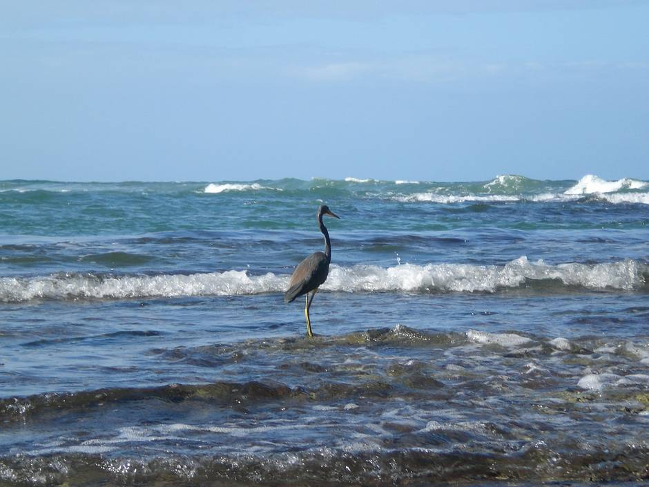 Top things to do in Costa Rica: watching its wildlife!
