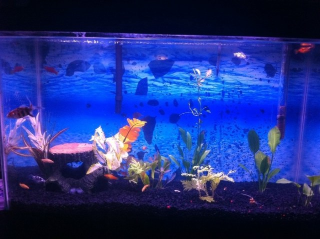 5 gallon fish tank is cloudy 90 gallon tank cloudy for Cloudy water in new fish tank