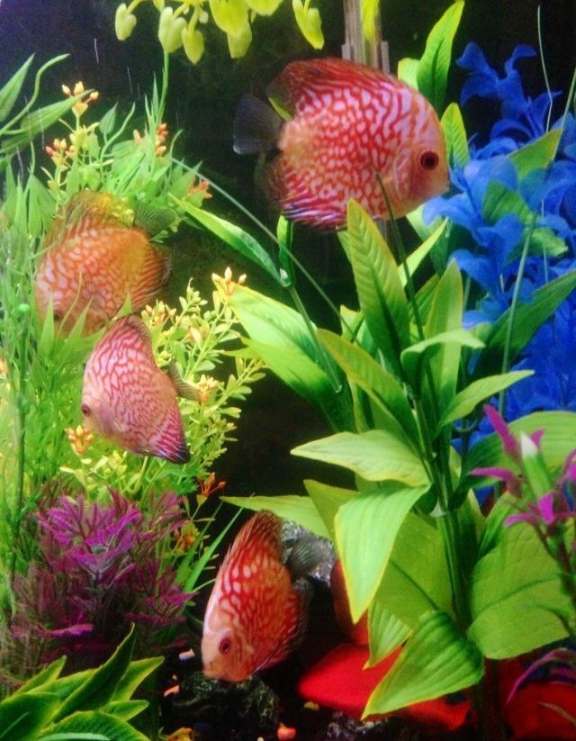 75 Gallon Discus Aquarium | My Aquarium Club