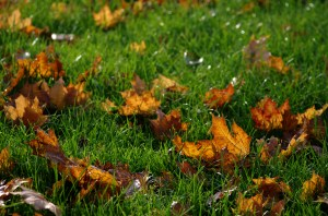 Leaves-on-lawn