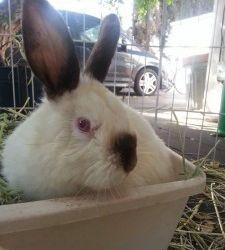 Theodore Rabbit - Rescued Feb 14, 2014