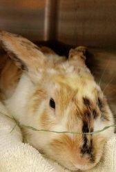 Sarah V - Rescued June 13, 2014
