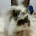 Ollie-san – Rescued Dec 5, 2013
