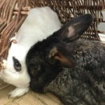 Poppie Comforts Otho After Treatment