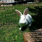 Bunnies Need Foster Homes