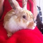 Sarah V – Rescued June 13, 2014