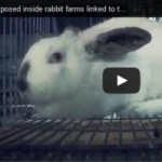 Cruelty in Rabbit Farms