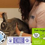 Rabbit Seminar on YouTube
