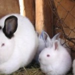 Petition Kroger – Stop Selling Rabbit Meat