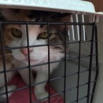 Rehoming Needed for Winnipeg Area Cats
