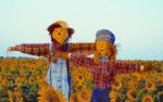 Pumpkin Patch holding Scarecrow Contest