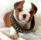 Yo Dawg This Dog Is uh Cute