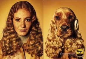 Doggy Look Alikes