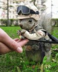 Military Squirrel