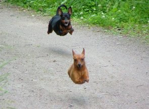 Hover Dogs
