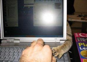 Laptop Kitty Arm