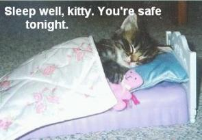 Sleep Well Kitty