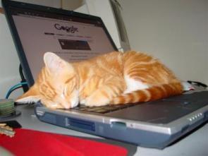 Sleepy Google Cat