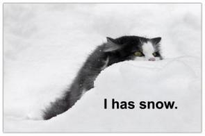 This cat has snow