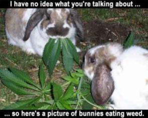 Weed Bunnies