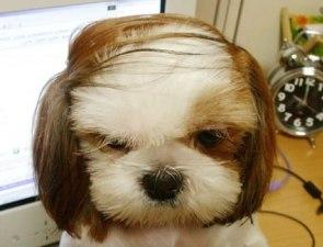 The Donald Trump Dog