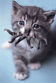 Cthulhu Kitty