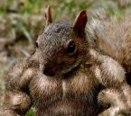 Muscle Squirrel