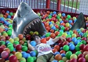 Ball Shark