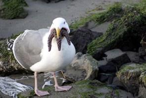 Cthulhu Seagull
