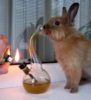 Weed Bunny