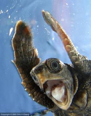 I Saw A Turtle