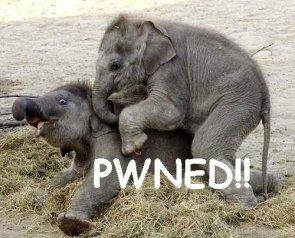 Elephant Pwn'd