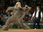 Wookie Pitcher