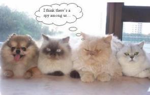 Spy Among Us (Kitties Vs Puppies)