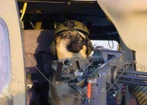 Doggy Gunner