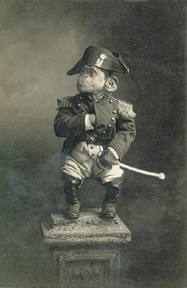 Admiral Monkey