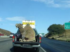 Highway Camel