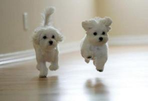 Floating Cute Puppies