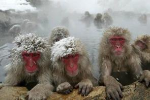 Arctic Baboons